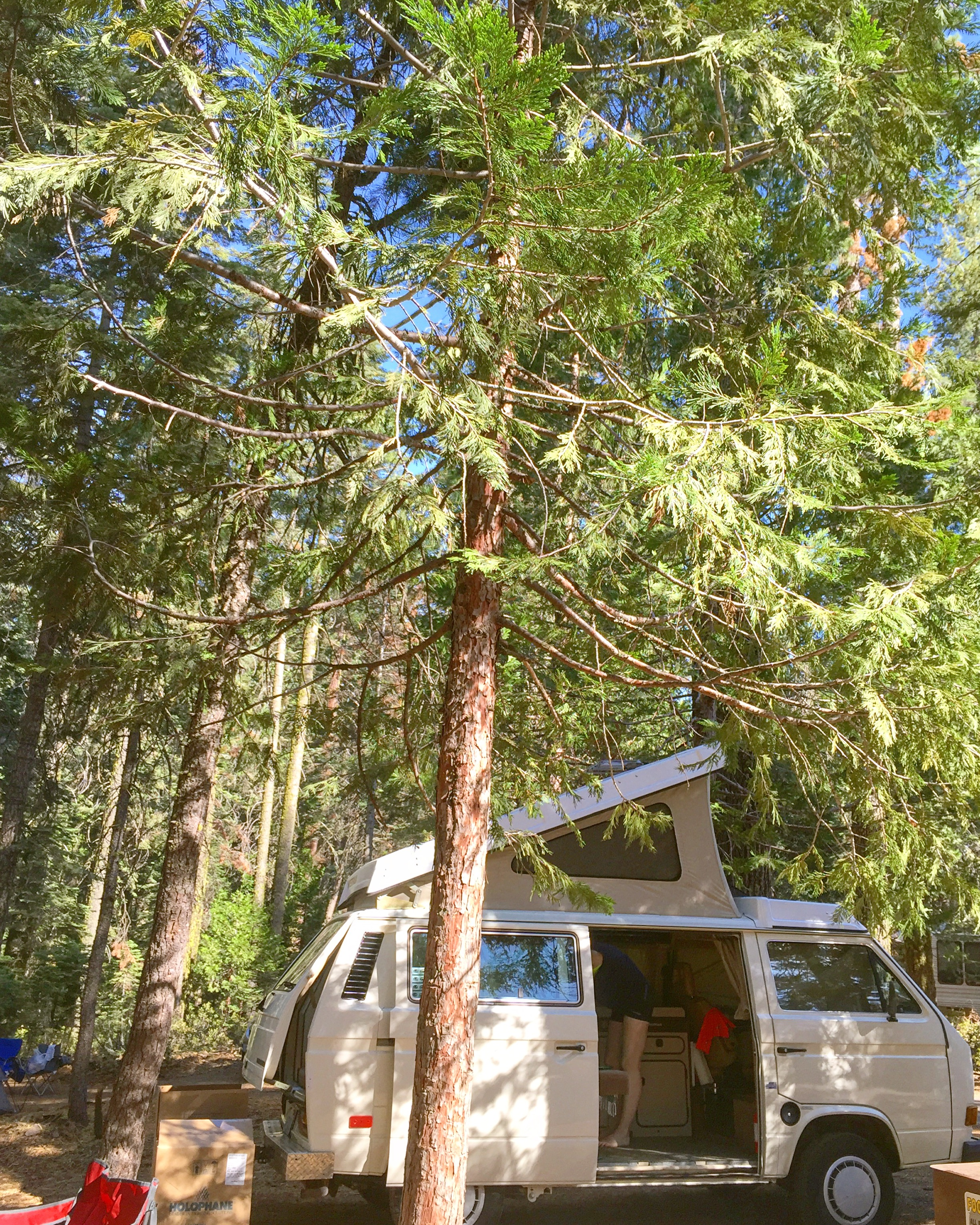 VW Westfalia at Crane Flat - Yosemite