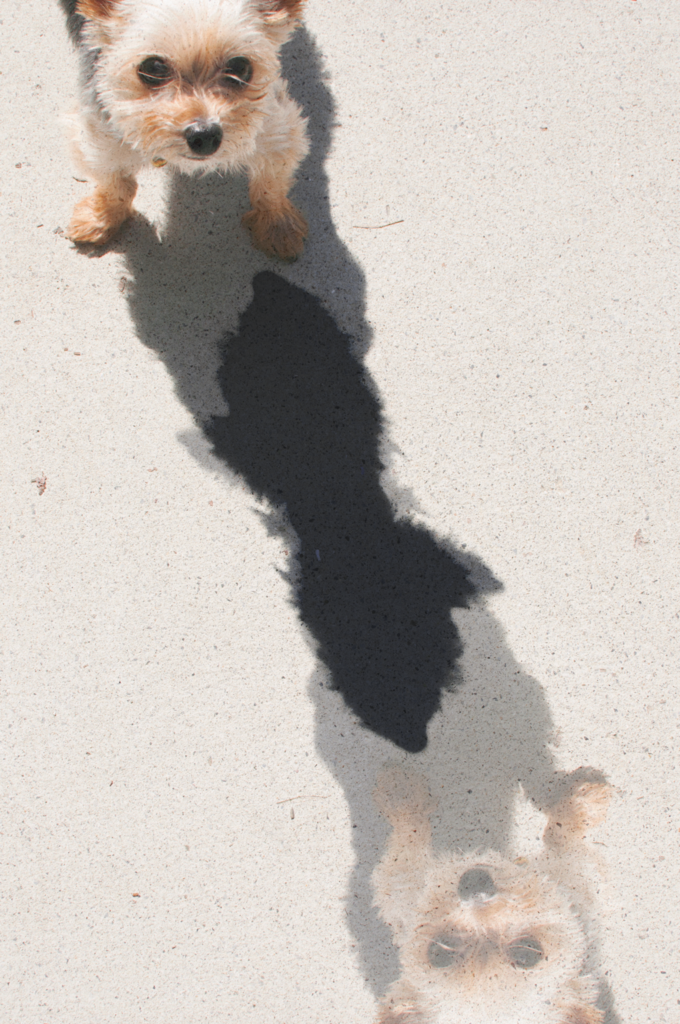 Week 9 Photo Challenge: Shadows